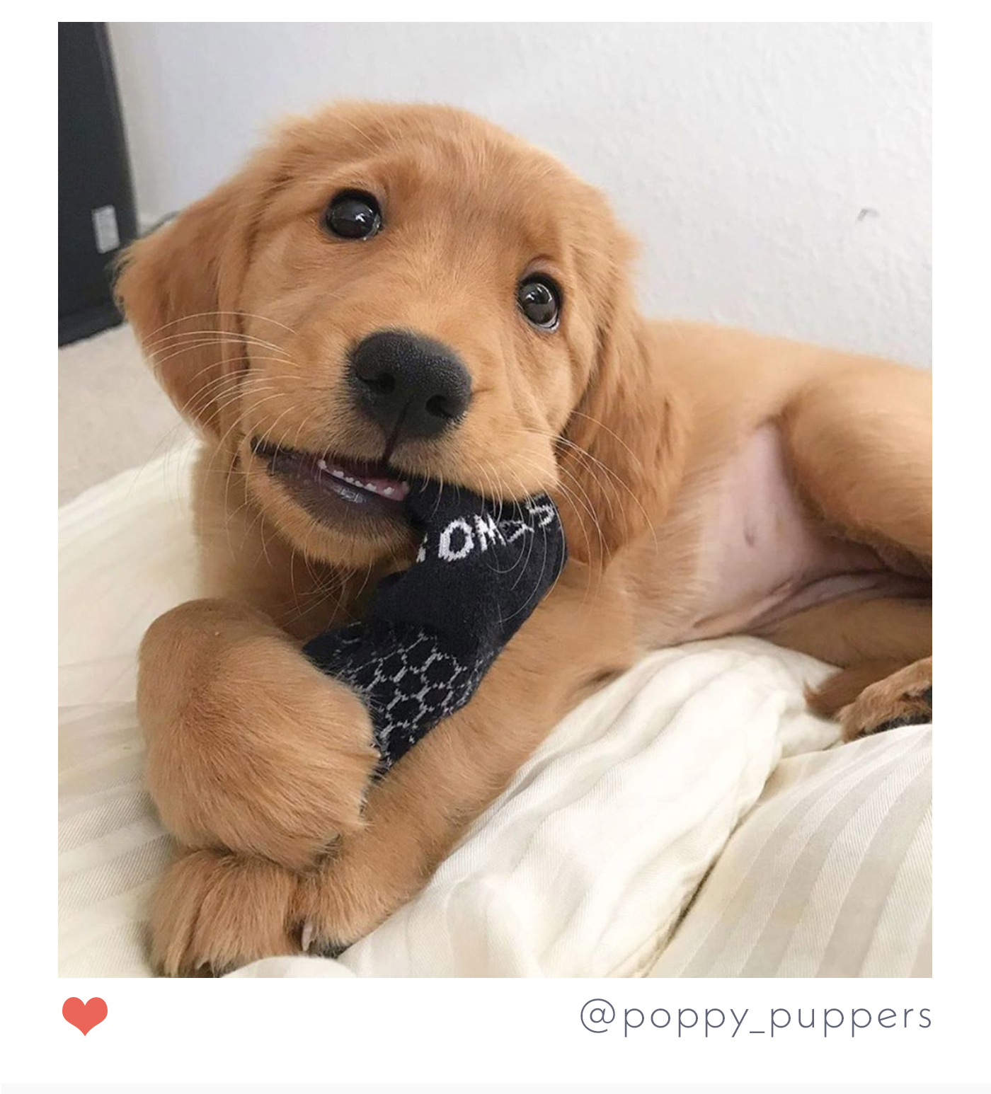 @poppy_puppers